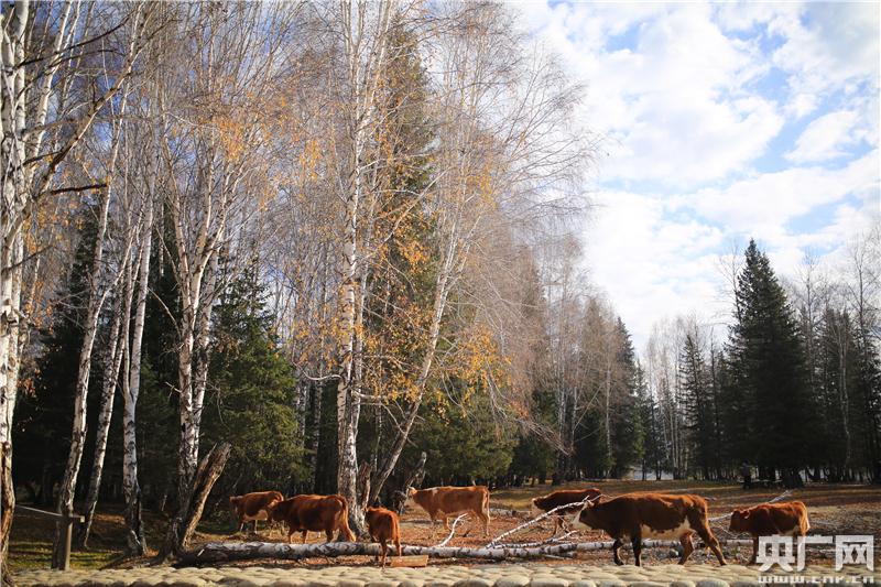 《泰金888官方網站》新疆旅遊市場回暖 長假助推秋冬旅遊路線
