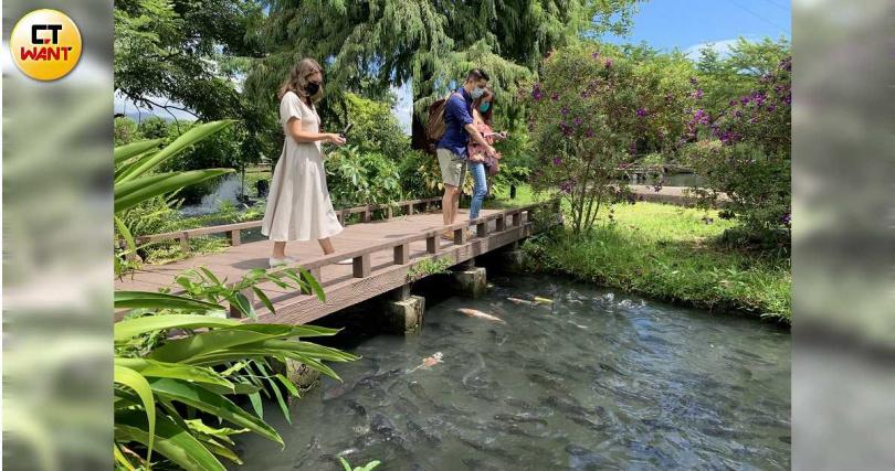 八甲魚場設計了景觀魚池、庭園棧道,供遊客散步遊憩。(圖/官其蓁攝)